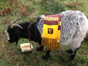 Gary Goat:  Hawthorn supporter